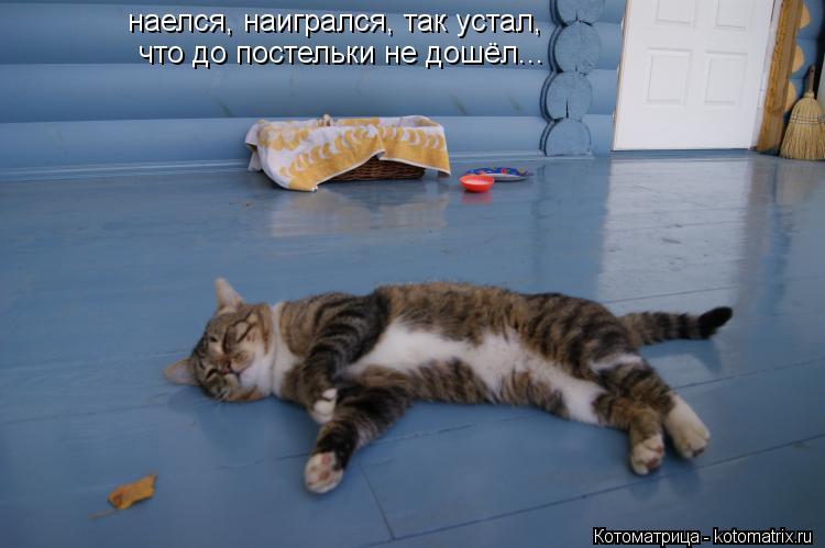 Котоматрица: наелся, наигрался, так устал, что до постельки не дошёл...