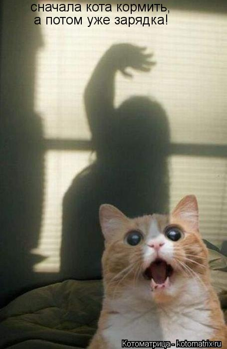 Котоматрица: сначала кота кормить, а потом уже зарядка!