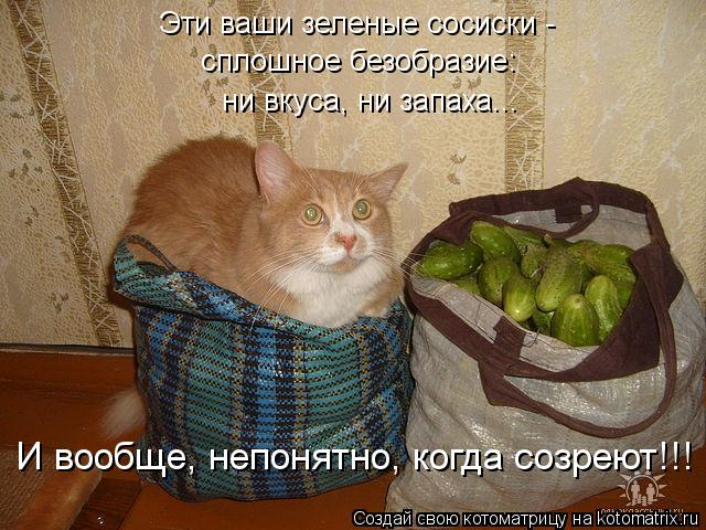 Котоматрица: Эти ваши зеленые сосиски -  сплошное безобразие:  ни вкуса, ни запаха... И вообще, непонятно, когда созреют!!!