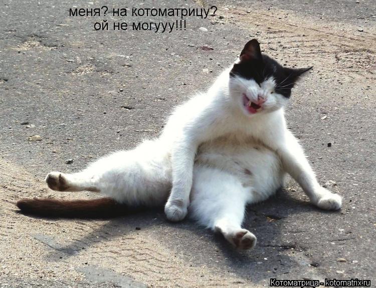 Котоматрица: меня? на котоматрицу? ой не могууу!!!