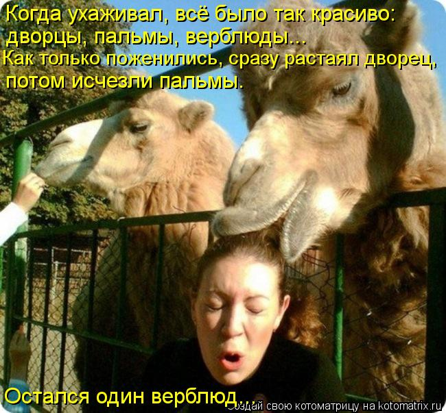 Котоматрица: Когда ухаживал, всё было так красиво: дворцы, пальмы, верблюды... Остался один верблюд... потом исчезли пальмы. Как только поженились, сразу ра