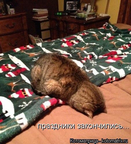 Котоматрица: праздники закончились...