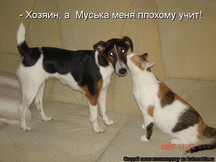 Котоматрица: - Хозяин, а  Муська меня плохому учит!