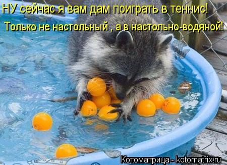 Котоматрица: НУ сейчас я вам дам поиграть в теннис! Только не настольный , а в настольно-водяной!