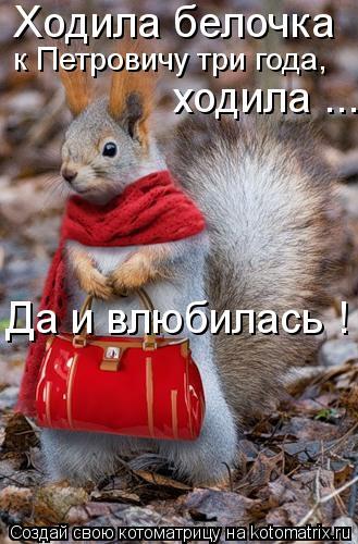 Котоматрица: Ходила белочка  к Петровичу три года, ходила ... Да и влюбилась !