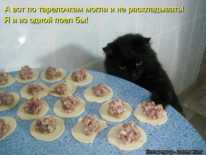 Котоматрица: Я и из одной поел бы! А вот по тарелочкам могли и не раскладывать!