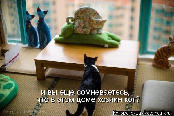 Котоматрица: и вы ещё сомневаетесь, что в этом доме хозяин кот?