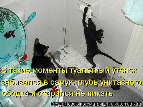 Котоматрица: В такие моменты туалетный утёнок забивался в самую глубь унитазного  ободка и старался не пикать.