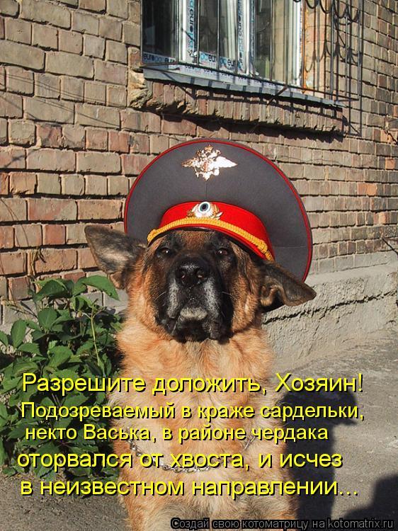 Котоматрица: Разрешите доложить, Хозяин! Подозреваемый в краже сардельки,  некто Васька, в районе чердака  оторвался от хвоста, и исчез в неизвестном нап