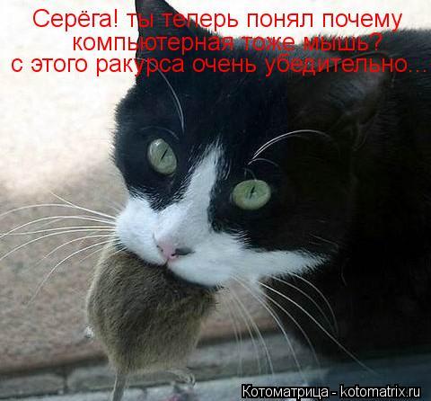 Котоматрица: Серёга! ты теперь понял почему компьютерная тоже мышь? с этого ракурса очень убедительно...