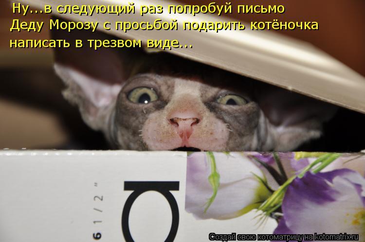 Котоматрица: Ну...в следующий раз попробуй письмо Деду Морозу с просьбой подарить котёночка  написать в трезвом виде...