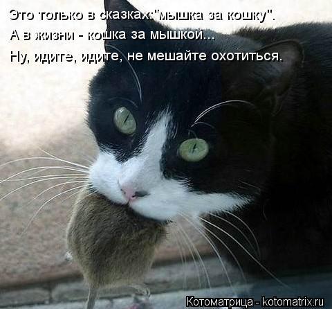 """Котоматрица: Это только в сказках:""""мышка за кошку"""". А в жизни - кошка за мышкой... Ну, идите, идите, не мешайте охотиться."""