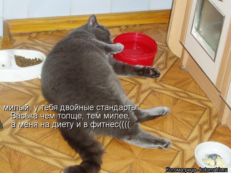 Котоматрица: милый, у тебя двойные стандарты: Васька чем толще, тем милее, а меня на диету и в фитнес((((