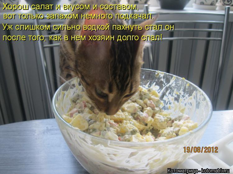 Котоматрица: вот только запахом немного подкачал.   после того, как в нем хозяин долго спал! Хорош салат и вкусом и составом,  Уж слишком сильно водкой пах