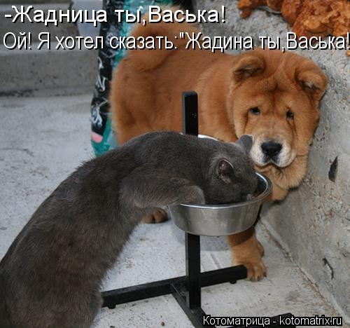 "Котоматрица: -Жадница ты,Васька! Ой! Я хотел сказать:""Жадина ты,Васька!"""