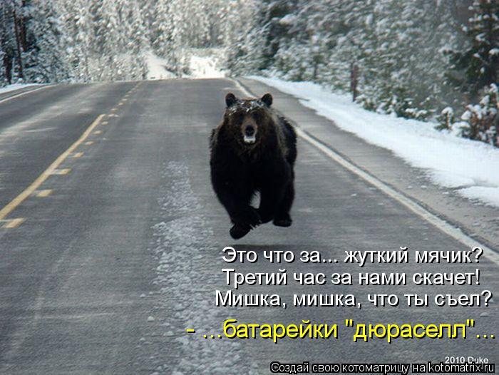 если сон где убегаешь от медведя Питер приезжают туристы