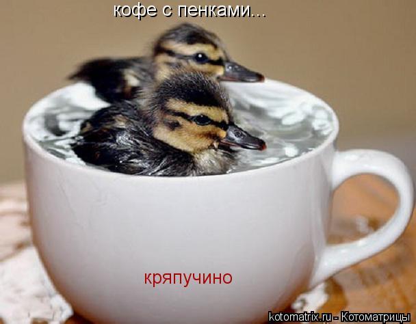 Котоматрица: кофе с пенками... кряпучино