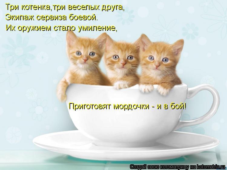 Котоматрица: Три котенка,три веселых друга, Экипаж сервиза боевой. Их оружием стало умиление, Приготовят мордочки - и в бой!