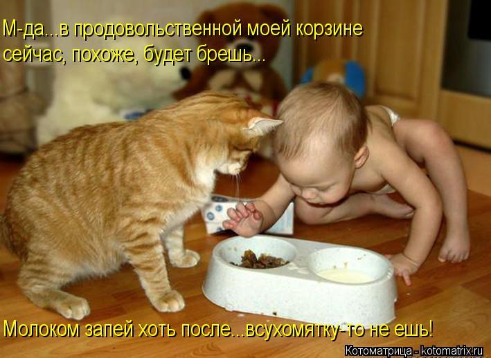 Котоматрица: М-да...в продовольственной моей корзине сейчас, похоже, будет брешь... Молоком запей хоть после...всухомятку-то не ешь!