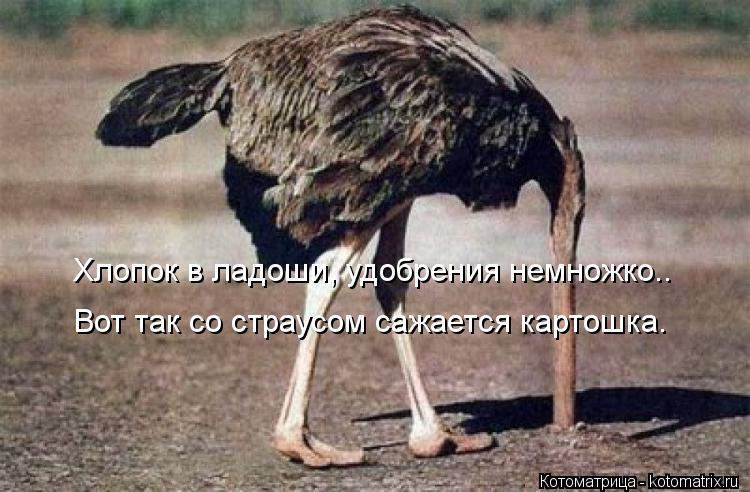 Котоматрица: Хлопок в ладоши, удобрения немножко.. Вот так со страусом сажается картошка.