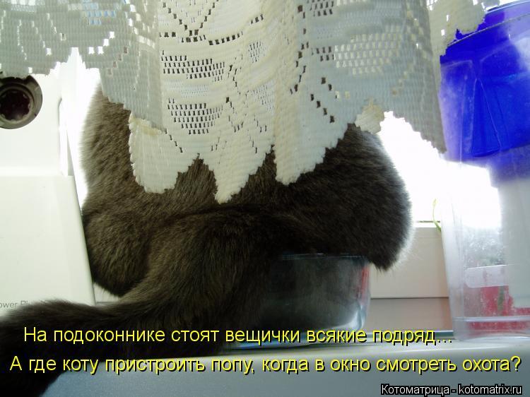 Котоматрица: На подоконнике стоят вещички всякие подряд... А где коту пристроить попу, когда в окно смотреть охота?