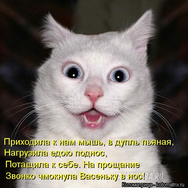 Котоматрица: Приходила к нам мышь, в дупль пьяная, Нагрузила едою поднос, Потащила к себе. На прощание Звонко чмокнула Васеньку в нос!