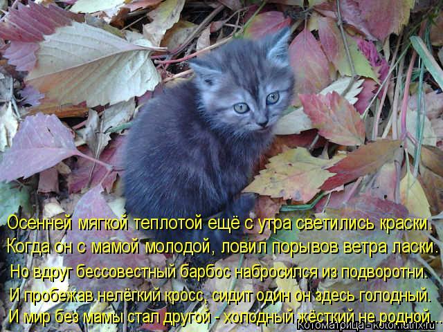 Котоматрица: Когда он с мамой молодой, ловил порывов ветра ласки. Осенней мягкой теплотой ещё с утра светились краски. Но вдруг бессовестный барбос набр
