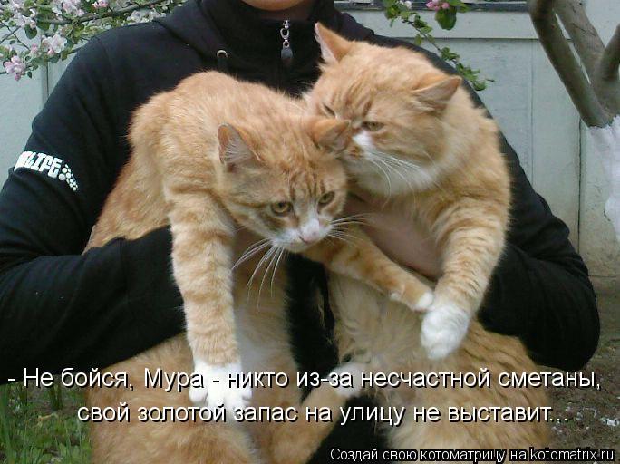 Котоматрица: - Не бойся, Мура - никто из-за несчастной сметаны,  свой золотой запас на улицу не выставит...
