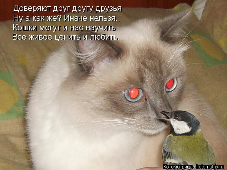 Котоматрица: Доверяют друг другу друзья . Ну а как же? Иначе нельзя.. Кошки могут и нас научить Все живое ценить и любить..