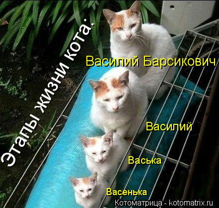 Котоматрица: Этапы жизни кота: Васенька Васька Василий Василий Барсикович
