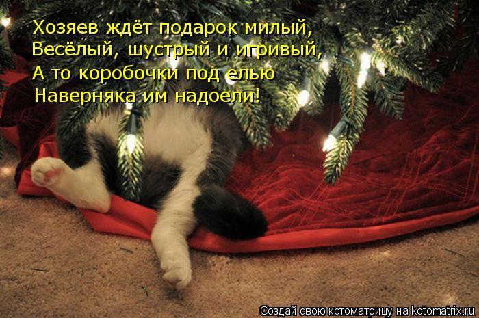Котоматрица: Хозяев ждёт подарок милый, Весёлый, шустрый и игривый, А то коробочки под елью Наверняка им надоели!