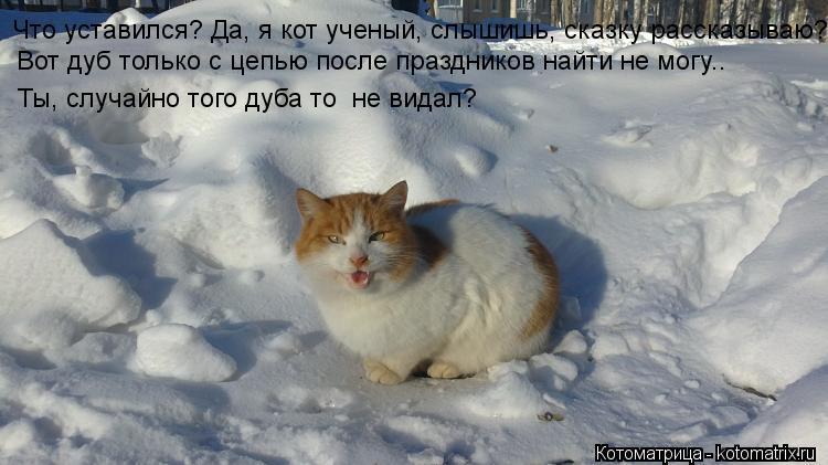 Котоматрица: Что уставился? Да, я кот ученый, слышишь, сказку рассказываю? Вот дуб только с цепью после праздников найти не могу.. Ты, случайно того дуба то