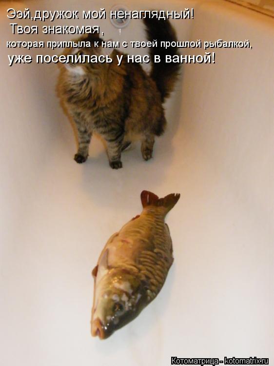 Котоматрица: Ээй,дружок мой ненаглядный! Твоя знакомая  , которая приплыла к нам с твоей прошлой рыбалкой, уже поселилась у нас в ванной!