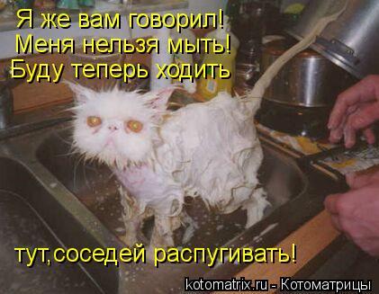 Котоматрица: Я же вам говорил! Меня нельзя мыть! Буду теперь ходить  тут,соседей распугивать!
