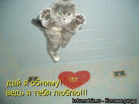 Котоматрица: дай я обниму! ведь я тебя люблю!!!