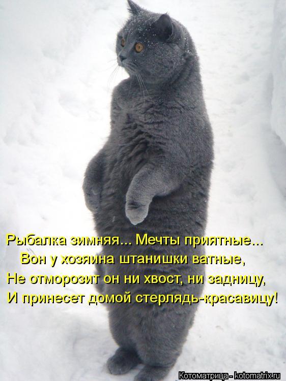 Котоматрица: Рыбалка зимняя... Мечты приятные... Вон у хозяина штанишки ватные, Не отморозит он ни хвост, ни задницу, И принесет домой стерлядь-красавицу!