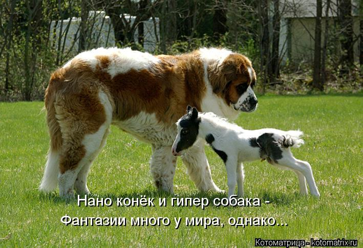 Котоматрица: Нано конёк и гипер собака -  Фантазии много у мира, однако...
