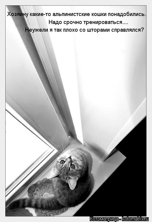 Котоматрица: Хозяину какие-то альпинистские кошки понадобились.  Надо срочно тренироваться.... Надо срочно тренироваться.... Неужели я так плохо со шторам