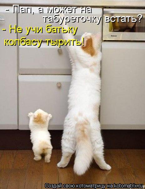 Котоматрица: - Пап, а может на  табуреточку встать? - Не учи батьку колбасу тырить!