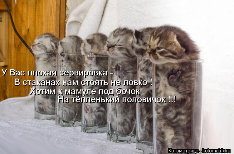 Котоматрица: На тёпленький половичок !!! У Вас плохая сервировка - В стаканах нам стоять не ловко ! Хотим к мамуле под бочок