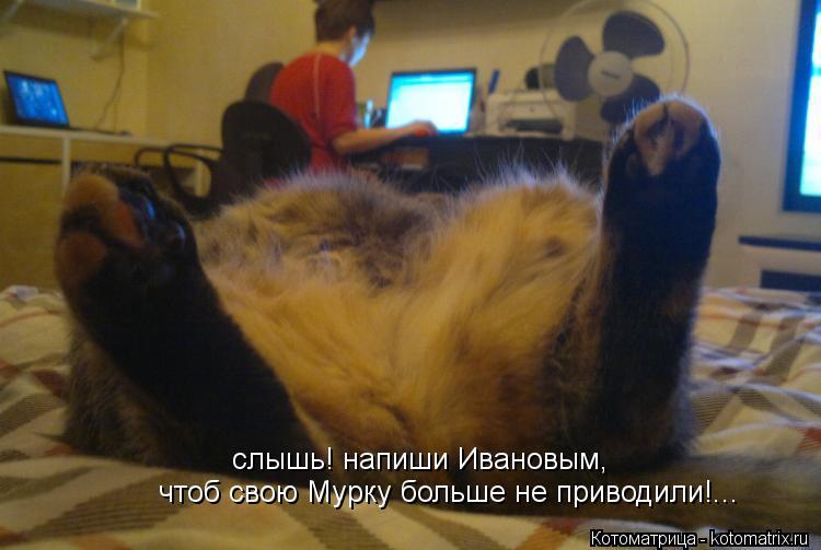 Котоматрица: слышь! напиши Ивановым, чтоб свою Мурку больше не приводили!...
