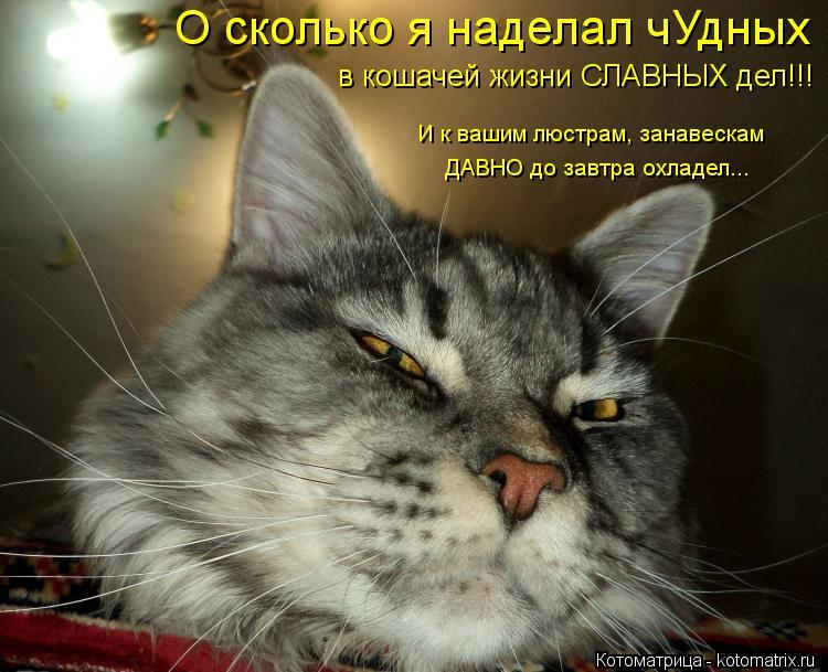 Котоматрица: О сколько я наделал чУдных в кошачей жизни СЛАВНЫХ дел!!!  И к вашим люстрам, занавескам  ДАВНО до завтра охладел...