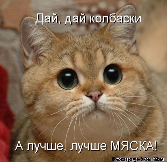 Котоматрица: Дай, дай колбаски Дай, дай колбаски А лучше, лучше МЯСКА!