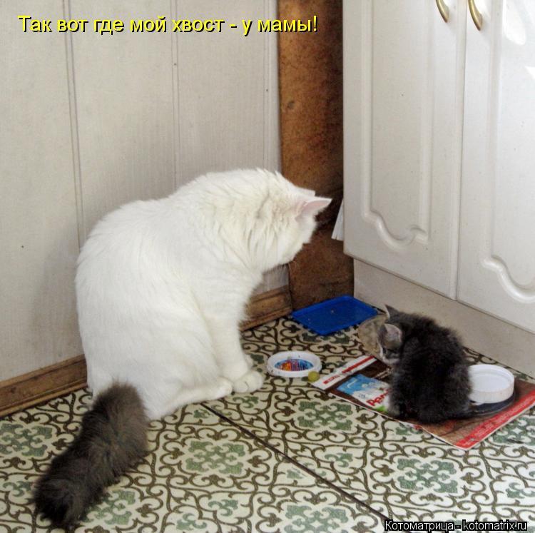 Котоматрица: Так вот где мой хвост - у мамы!