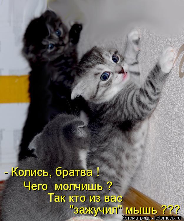 """Котоматрица: - Колись, братва !  """"зажучил"""" мышь ??? Так кто из вас Чего  молчишь ?"""