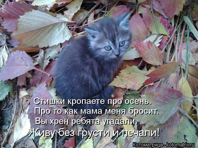Котоматрица: Стишки кропаете про осень. Про то как мама меня бросит. Вы хрен ребята угадали. Живу без грусти и печали!