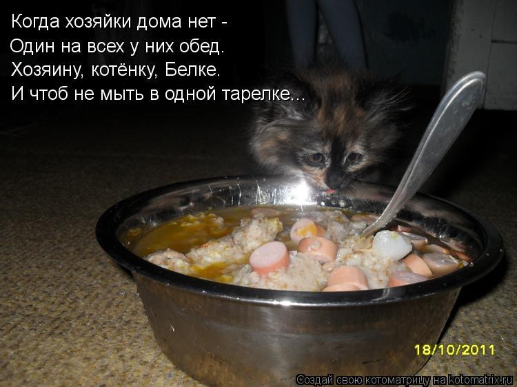 Котоматрица: Когда хозяйки дома нет -  Хозяину, котёнку, Белке. Один на всех у них обед. И чтоб не мыть в одной тарелке...