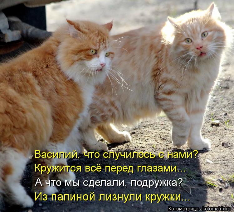 Котоматрица: Василий, что случилось с нами? Кружится всё перед глазами... А что мы сделали, подружка? Из папиной лизнули кружки...