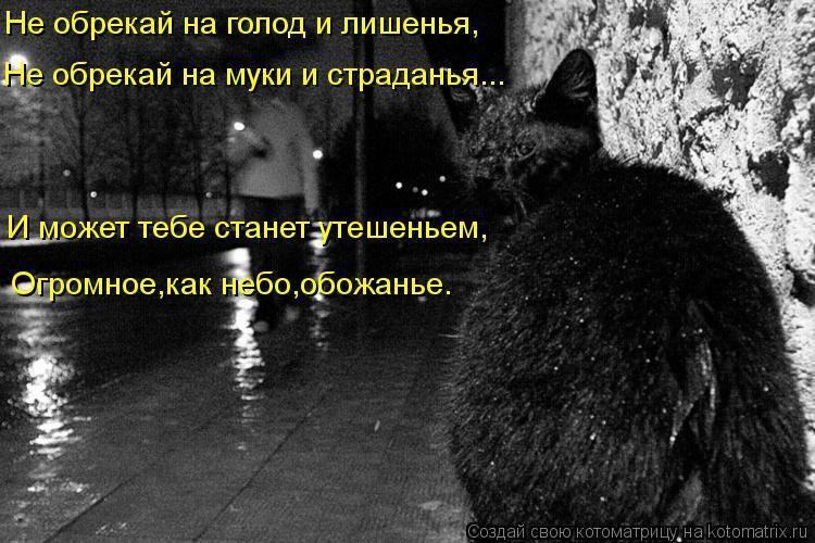 Котоматрица: Не обрекай на голод и лишенья, Не обрекай на муки и страданья... И может тебе станет утешеньем, Огромное,как небо,обожанье.