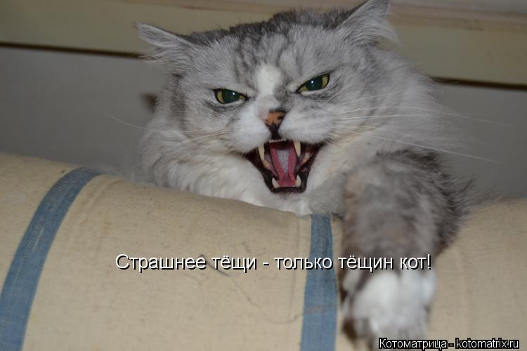 Котоматрица: Страшнее тёщи - только тёщин кот!